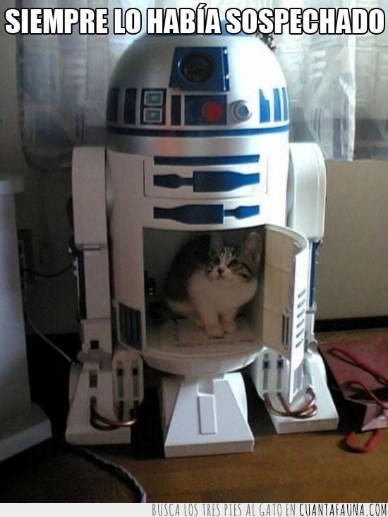Gato,Película,R2 D2,r2-d2,Robot,Star Wars