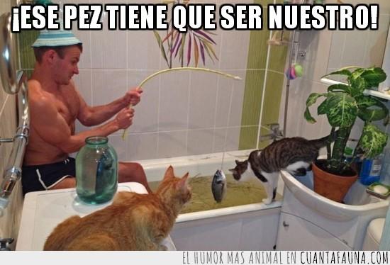 bañera,gatos,pesca,pescador,pez