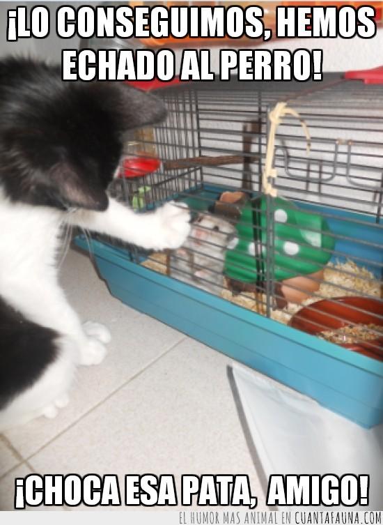 amigos,amistad,chocar,echar,gato,hamster,jaula,perro