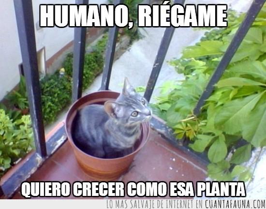 gato,maceta,planta,regar,Thor,turrón
