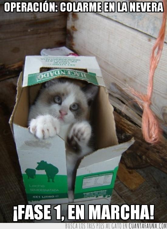 colarse,en marcha,gato,hacendado,leche,nevera,operacion