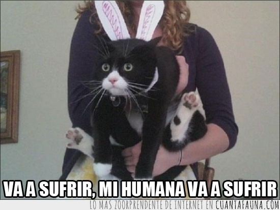 cabreo,conejito,disfraz,gato,su cara lo dice todo