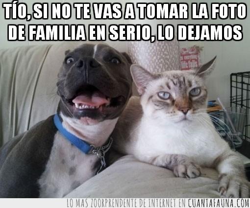 felicidad absoluta,foto de familia,gato,gracioso,perro,rostro