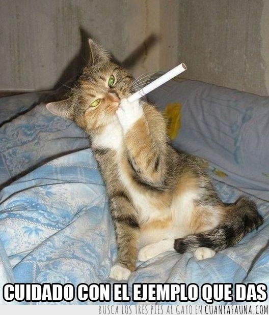 Cigarro,Ejemplo,Fumar,Gato,Imitar,Tabaco