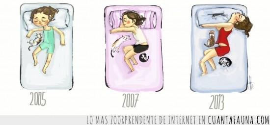 2005,2007,2013,cama,dormir,gatos,pasan los años
