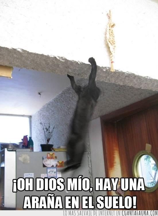 agarrado,asustado,brinco,gato,miedo,salto,susto,techo