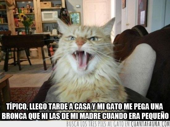 bronca,gato,gritar,llegar tarde,madre