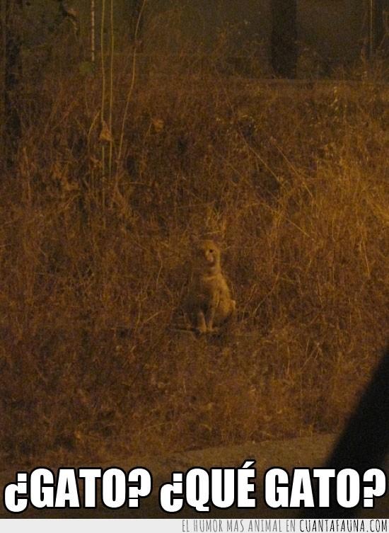 camuflado,camuflaje,escondido,gato,jardin seco,noche