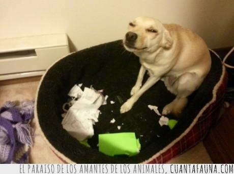 canino,cara,comer,deberes,la maldad hecha perro,perro,perro genio del mal,sospechosa