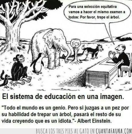 arbol,Educación,Einstein,elefante,estudiar,Genio,subir