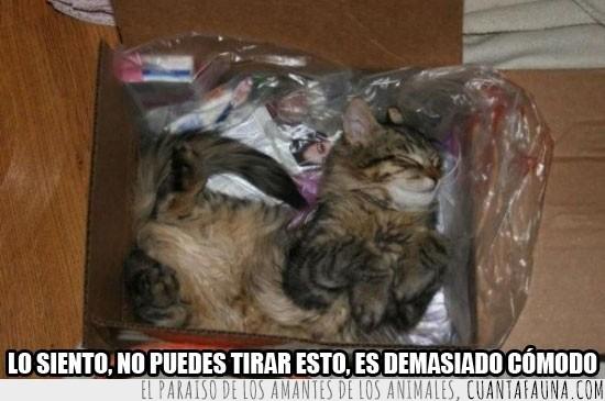 basura,caja,cama,dormir,gato,plástico