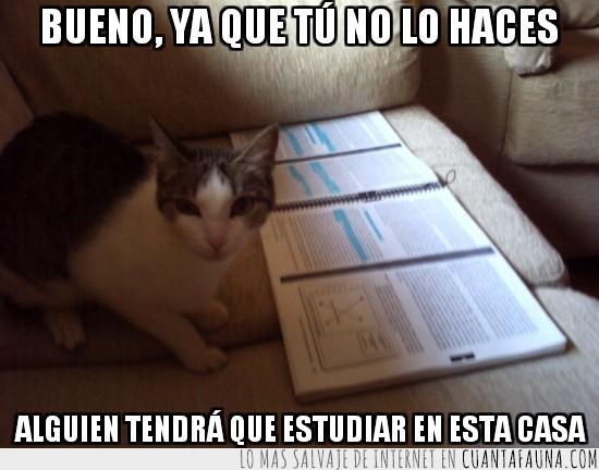 estudiar,exámenes,gata,libro,Mika