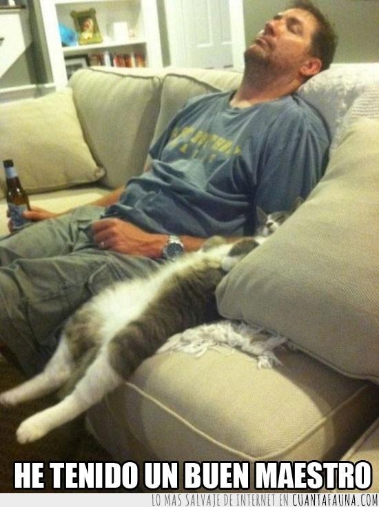 Descanso,Dormir,Gato,Sofá,Vago