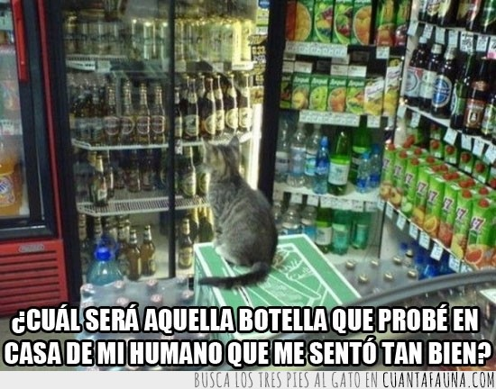 alcohol,bebidas,botellas,emborracahrse,gato,noche
