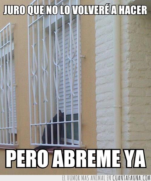 abrir,afuera,castigado,ventana