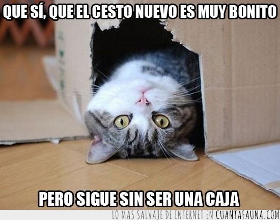 bocarriba,caja,cesta,gato,nuevo