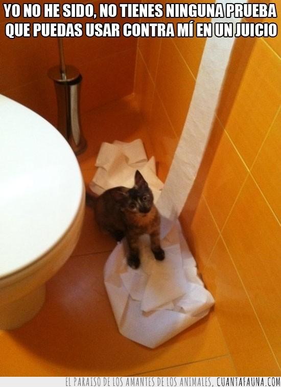 inocente,papel,Papel wc,wc,yo no he sido