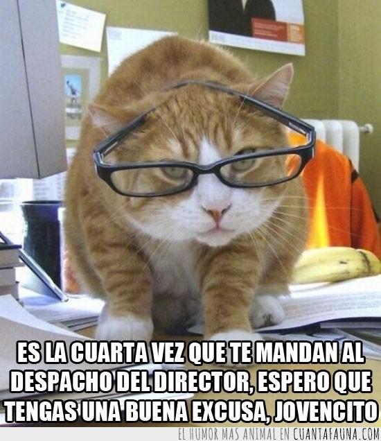 director,excusa,gafas,gato,oficina