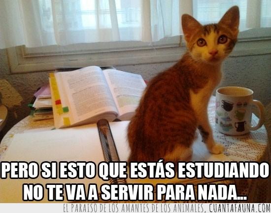 encima,estudiar,gato,libro,mirar