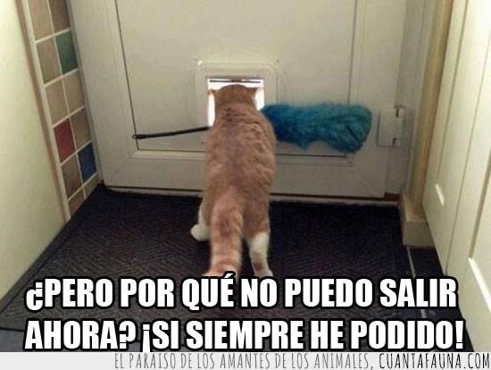Gatera,Gato,Para gatos,Plumero,Puerta,Salir