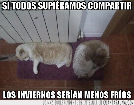 alfombra,compartir,gato,inviernos,menos fríos,perro
