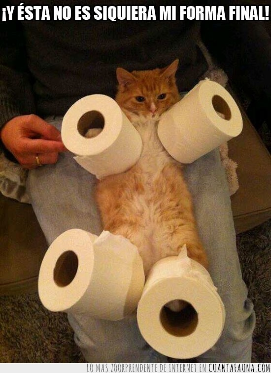 Gato,mi forma final,papel higienico,tierno