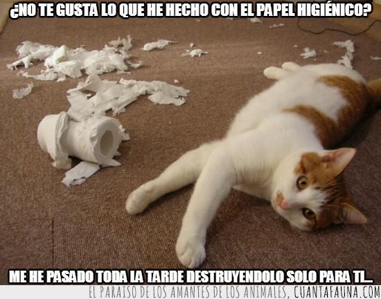 de water,destruir,gato,higienico,papel,tarde