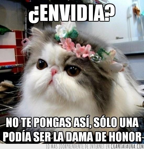 corona,cosita,dama de honor,flores,gato mono