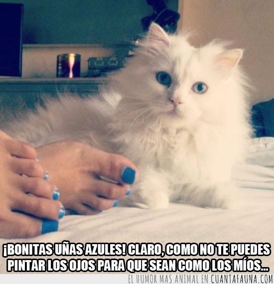 azul,azules,blanco,gato,mono,pies,pintadas,uñas