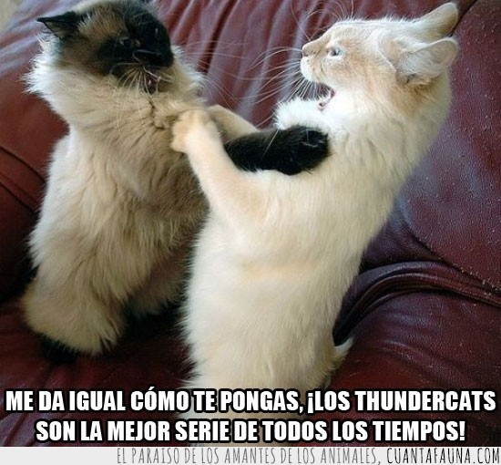 discusion,gatos,mejor serie,pelea,thundercats