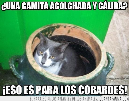 acolchado,caja,cesta,cobardes,gato,jarra,maceta