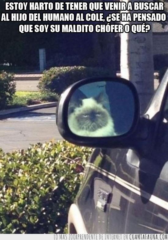 chofer,coche,conducir,esperar,gato,hijo,humano,retrovisor