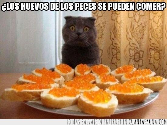 caviar,comer,gato,huevos de pez,humanos,peces