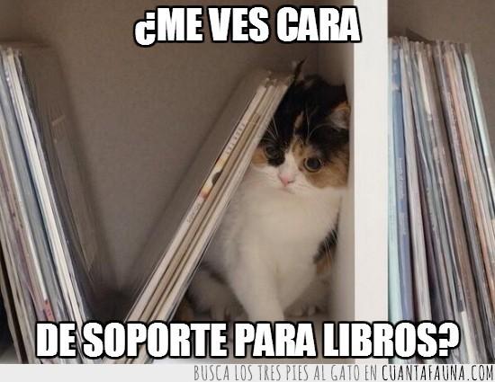 aguantar,aplastado,estanteria,libreria,soporte de libros