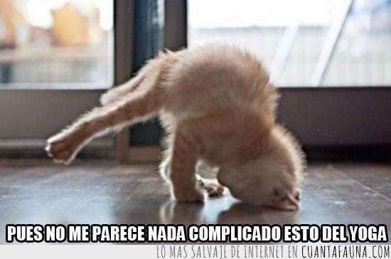 complicado,gato,postura,yoga