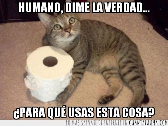 Gato,Higiénico,Papel,Rollo,Usar