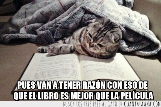 Gato,Lectura,Leer,Libro,Mejor que la pelicula