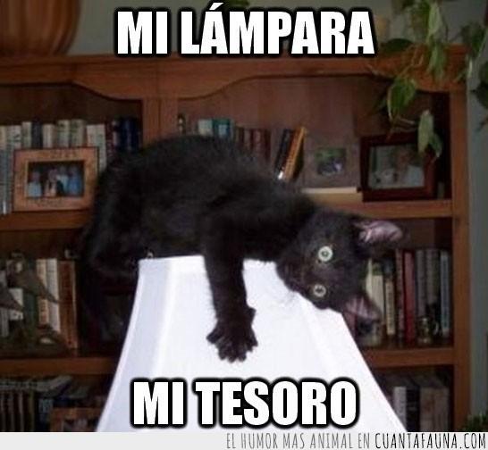 encima,gato,lampara,tesoro