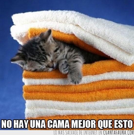 Dormir,Gato,Placer,Sueño,Toallas