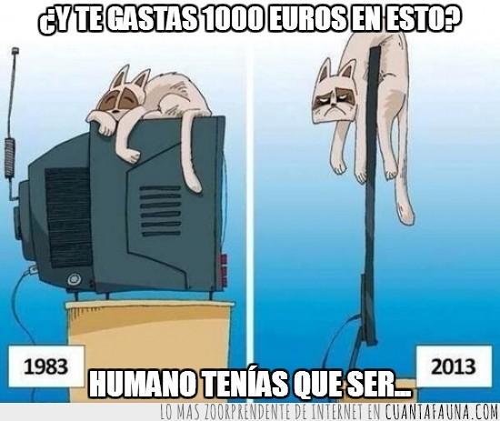 1000 euros,1983,2013,comic,gato,humano,tele