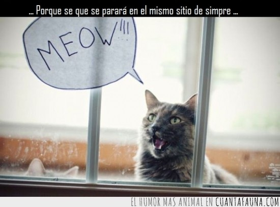 cristal,dialogo,globo,meow,miau,parar
