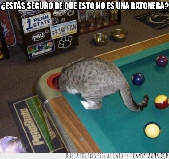 Agujero,Billar,Bola,Juego,Mesa,Pool,Ratón,Ratonera,Tronera