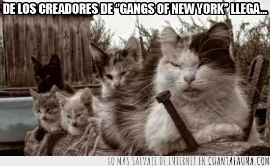 Atacar,Banda,Gangs of new york,Gato,Guerra