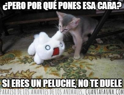 Cara,Comer,Expresion,Gato,Juguete,Morder,Peluche