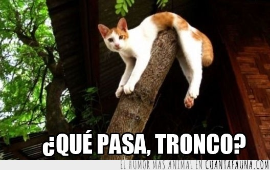 flexible,forma,gato,tronco