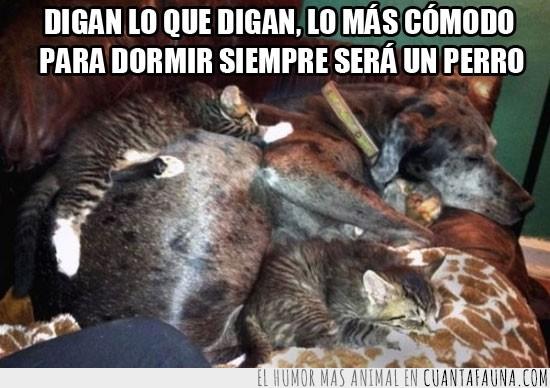barriga,caliente,comodo,dormir,encima,gato,perro