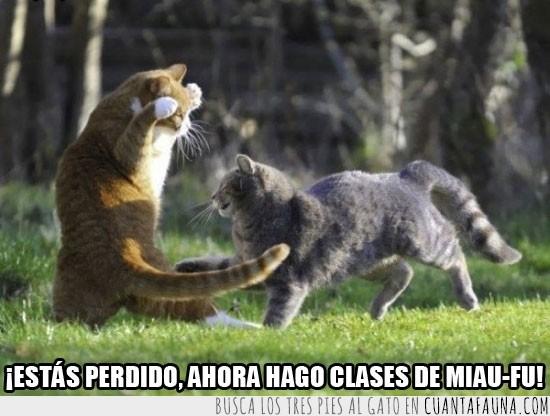 gatos,kung-fu,luchar,miao-fu,pelea