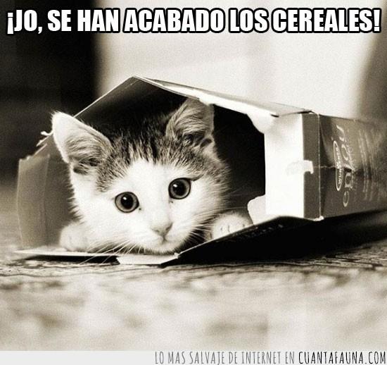 caja,cereales,comer,gato,perdonar