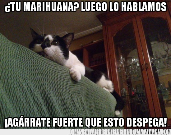 despega,flipar,gato,marihuana,sofá