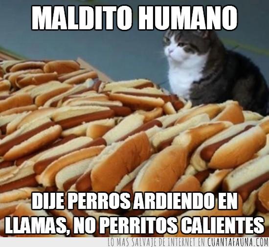en llamas,gato,hot dogs,perritos calientes,perros